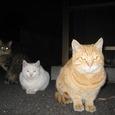 Cat35