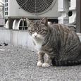Cat51