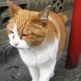 Cat58