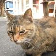 Cat66