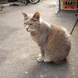 Cat69