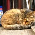 Cat71