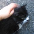 Cat79