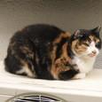 Cat85