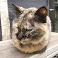 Cat87