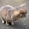 Cat95