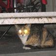 Cat29