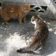 Cat212