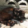 Cat214