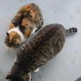 Cat221
