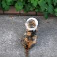 Cat224