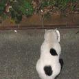 Cat233