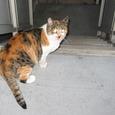 Cat234