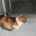 Cat235
