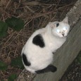 Cat236