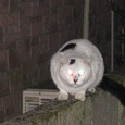 Cat237