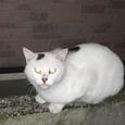 Cat238