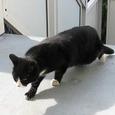 Cat247