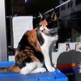 Cat202