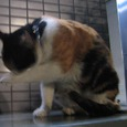 Cat231