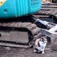 Cat239