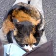 Cat241