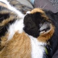 Cat243
