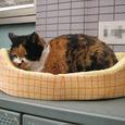 Cat301