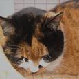 Cat302
