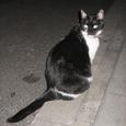 Cat305