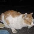 Cat308