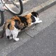 Cat314