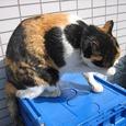 Cat315