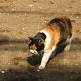 Cat316