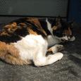 Cat327