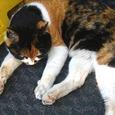 Cat331