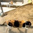 Cat332