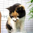 Cat334