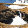 Cat337