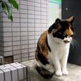 Cat348