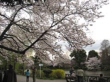 Sakurakaminoike