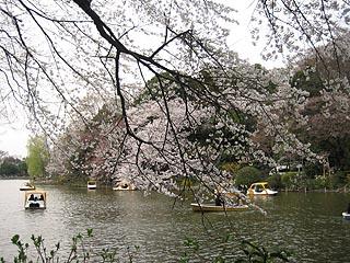 Sakurazenpukuji