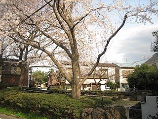 Hadashinosakura