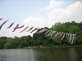 Koinoborikaminoike