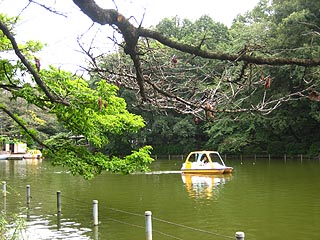 Madaboatgairu
