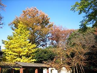 Kiirogakirei