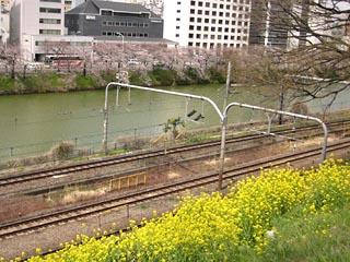 Sakura2011_4