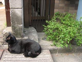 Sakura2011_7