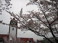Madasakura