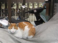 Parkingcat